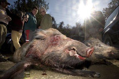 """Los cazadores defienden la carne de caza por """"ecológica y natural""""."""