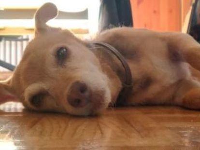 Una foto de Pícara, la perra perdida