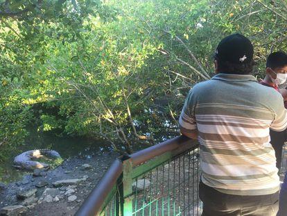 Visitantes observan un cocodrilo en un mirador en Tampico.