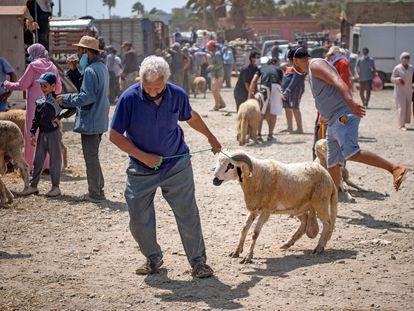 Compra de corderos el domingo 26 de julio en la ciudad costera de Sjirat (20 kilómetros al sur de Rabat), con motivo de la Fiesta del Sacrificio, que se celebró el 31 de julio.