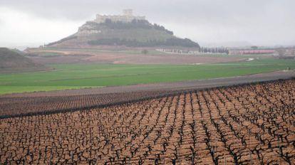 Viñedo en la provincia de Valladolid.