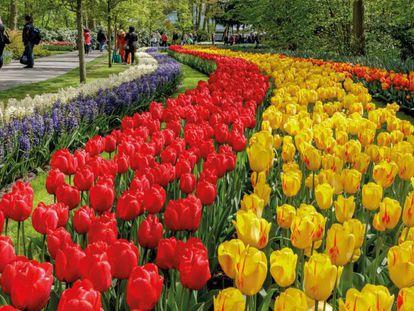 Parque Keukenhof, Lisse (Holanda)