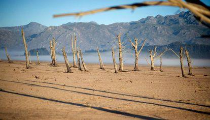 Troncos secos en la presa Theewaterskloof, afectada por la sequía, cerca de Ciudad del Cabo (Sudáfrica).