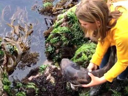 Una niña sin miedo rescata a un bebé de tiburón