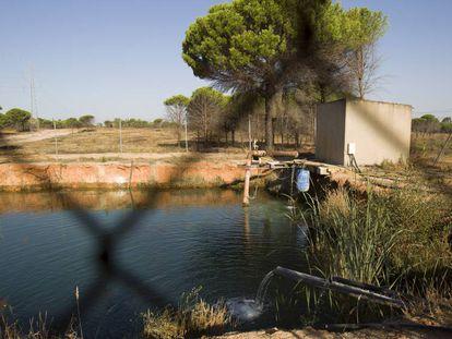 Una balsa ilegal entre los municipios de Lucena del Puerto y Moguer.
