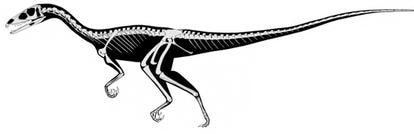 El dinosaurio <i>Tawa hallae</i> es un terópodo del tamaño de un perro grande con una larga cola.