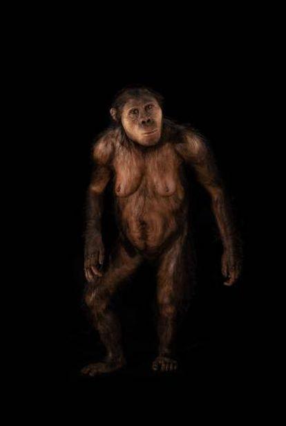 El homínido 'Lucy', en el Museo de la Evolución Humana de Burgos.