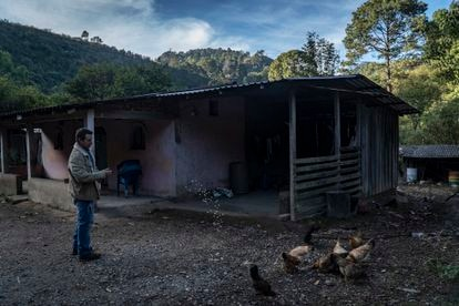A farmer from the State of Guerrero, one of the poorest in Mexico, feeds his chickens.