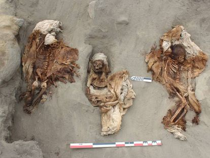 Restos del sacrifició chimú en la costa norte peruana.