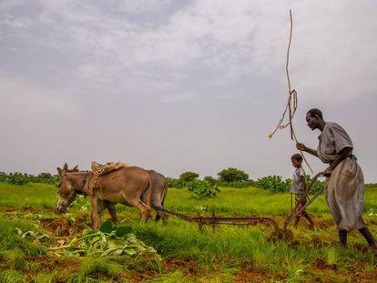 Un agricultor aprovecha la época de lluvias para labrar la tierra cerca de la localidad de Nema, al sur de Mauritania. Las técnicas en el campo siguen siendo rudimentarias y la producción insuficiente para garantizar la alimentación en calidad y cantidad adecuada.