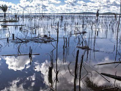 Árboles muertos en el río Xingu, Brasil.