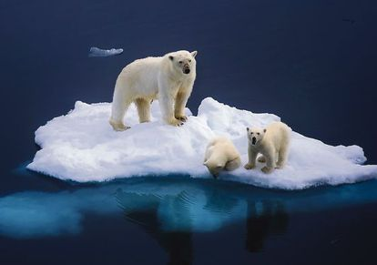 Una osa con dos cachorros en en el Círculo Polar Ártico.