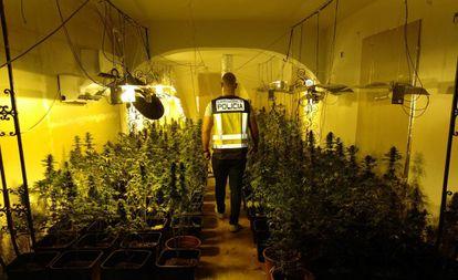 Imagen de una plantación de marihuana en una vivienda de Valencia distribuida el 4 de octubre por la policía.