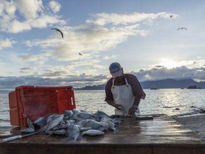Una decena de pequeñas comunidades de Baja California Sur se unió para combatir la sobrepesca y creó en 2012 las primeras zonas de refugio de México. Ahora la cantidad de peces ha aumentado un 30% allí