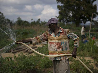Un granjero riega sus cultivos con una manguera en Haití.