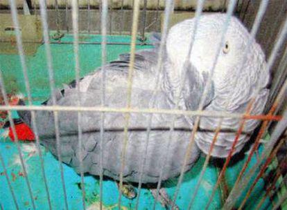 El loro, Yosuke, dentro de su jaula, en la comisaria de Nagareyama, al este de Tokio.