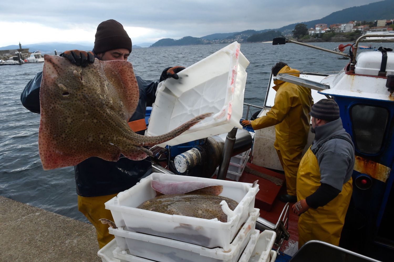 Los pescadores descargan las capturas en el puerto de Bueu, en Pontevedra.