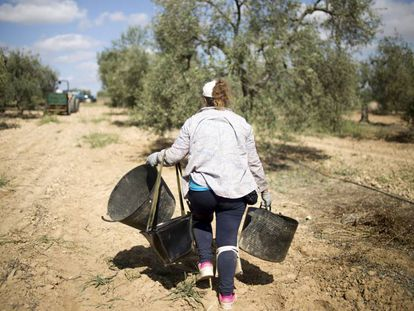 Recolección de aceitunas en una finca de la localidad sevillana de Bollullos de la Mitación.