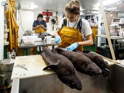 Científicos trabajando en la campaña Porcupine, que el Instituto Español de Oceanografía realizó en el Gran Sol, en aguas irlandesas, el pasado otoño.