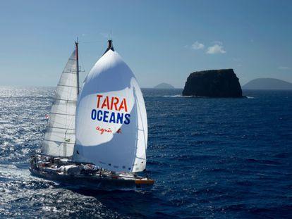 El velero 'Tara', cedido por una diseñadora de moda francesa.