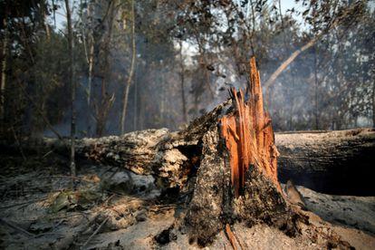 Un árbol arde mientras los miembros de la brigada de bomberos del Instituto Brasileño de Medio Ambiente y Recursos Naturales Renovables (IBAMA) intentan controlar los puntos calientes en un tramo de la selva amazónica cerca de Apui, el 11 de agosto.
