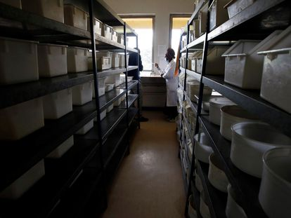 Dos investigadores trabajan en el laboratorio del Centro Internacional de Fisiología y Ecología de Insectos (ICIPE) en Nairobi, Kenia, el 11 de mayo de 2020.