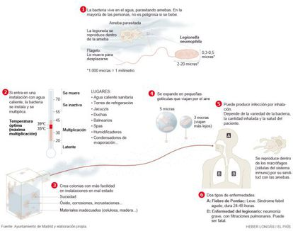 Morfología de la bacteria y formas de contagio.
