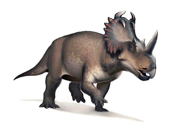 Recreación artística de un Centrosaurus apertus