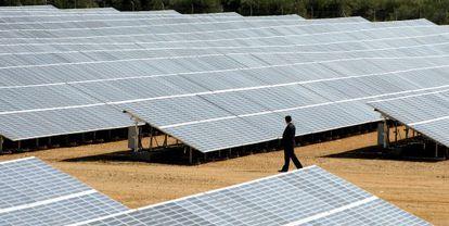 Un hombre supervisa un huerto solar de Jaén.