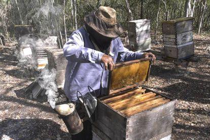 El apicultor Feliciano Feliciano Ucan Poot en Hopelchén, en el estado de Campeche (México).