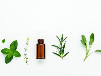 Cuatro venenos de las plantas con los que damos sabor a la comida, y uno que hay que evitar