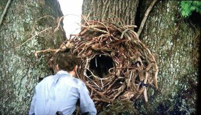 Uno de los nidos de Joshua Walsh.