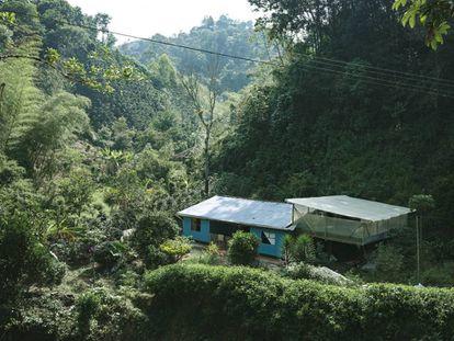 Una finca cafetera a más de 1.600 metros de altitud en la cordillera oriental del Huila.
