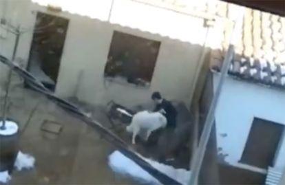 Momento del maltrato a la perra 'Laka'