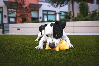 Las formas animales a menudo son recurrentes en los juguetes para perros.