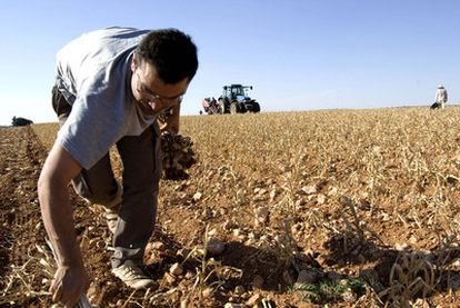 Finca de agricultura ecológica en Cuenca, financiada por Triodos Bank.