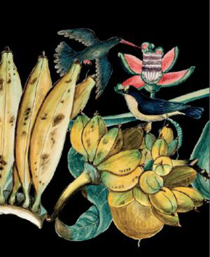 La exposición 'Las plantas en la primera globalización',