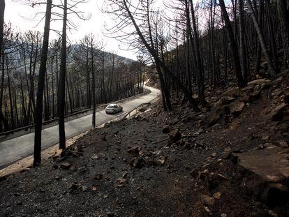 Vista de la zona de pinos quemados en la zona del Puerto de LasPeñas Blancas (Jubrique, Málaga), tras quedar ser arrasado por el incendio de Sierra Bermeja.