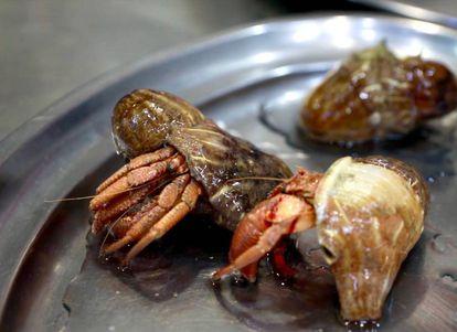 Cangrejo ermitaño. A modo de protuberancia, sobre su cáscara, un parásito, la denominada 'figa' o higo de mar.
