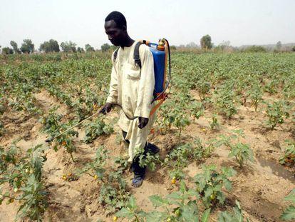 Un hombre rocía sus cultivos con pesticidas en Buruku (Nigeria).