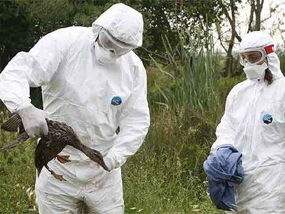 Dos veterinarios en la recogida de aves en la zona de Salburua.