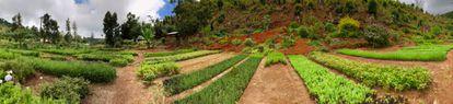 Plantaciones de Ecosia en Tanzania.