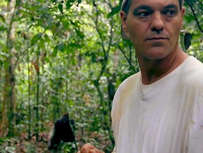 Frank de la Jungla fue a ver gorilas y volvió sorprendido por los humanos