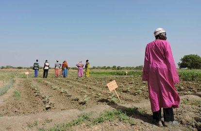 Un grupo de campesinos de Amnaback, en las afueras de Yamena (la capital de Chad), en un terreno donde reciben formación agrícola a orillas del río Logone.