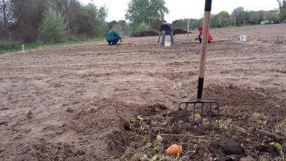 La formación combina los aprendizajes teóricos con la práctica sobre el terreno