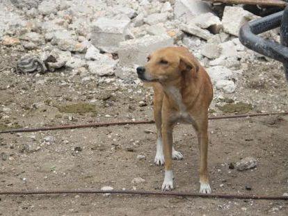 Un perro callejero en Puerto Príncipe.