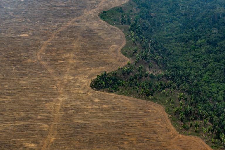 Zona de la selva del Amazonas deforestada para plantar soja cerca de Porto Velho (Brasil), en 2019.