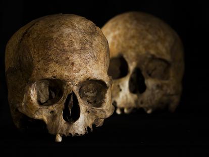 Cráneos de una mujer (en primer plano) y un hombre del Neolítico Medio hallados en la Cueva de la Dehesilla (Cádiz). En la parte superior derecha del primero se observa la marca de la trepanación.