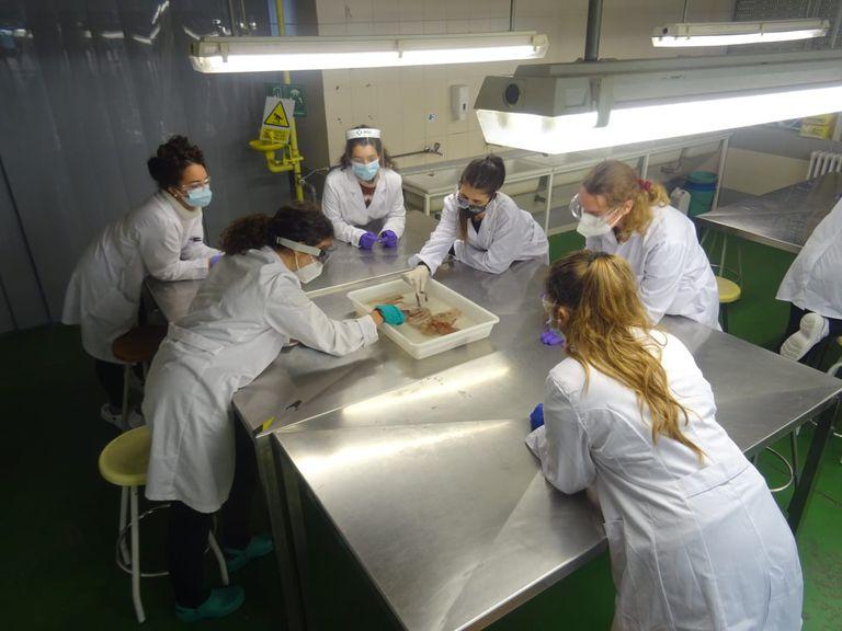 Prácticas de Anatomía de primero de Veterinaria en la Universidad Complutense de Madrid.