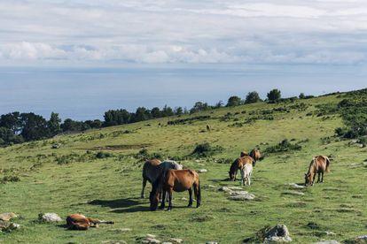Un grupo de caballos pasta en el monte Jaizkibel, en Gipuzkoa.